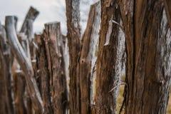 Cerca hecha en casa del zarzo hecha fuera de la madera en Nueva Zelanda foto de archivo libre de regalías