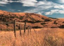 Cerca Landscape do gado Fotografia de Stock