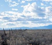 Cerca Line de poste del pino Imagenes de archivo
