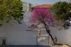 Cerca madura de la pintura del hombre al aire libre foto de archivo