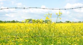 Cerca And Meadow del alambre de púas Fotografía de archivo libre de regalías
