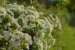 Cerca natural Foto de archivo libre de regalías
