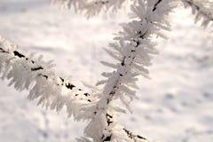 Cerca negra del invierno adornada con la escarcha blanca en un enero m foto de archivo