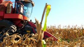 Cerca para arriba, propósito de cosechar el proceso del campo de maíz en otoño temprano maíz rojo grande de la cosecha mecánica d almacen de metraje de vídeo