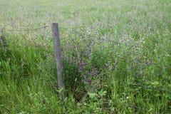 Cerca Post com arame farpado em torno do campo do trevo Imagens de Stock