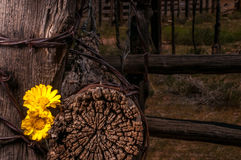 Cerca rústica Post With Wildflowers Foto de Stock Royalty Free