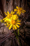 Cerca rústica Post With Wildflowers Foto de Stock