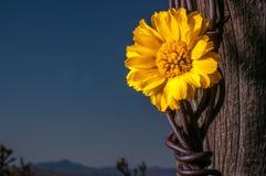 Cerca rústica Post With Wildflowers Imagem de Stock Royalty Free