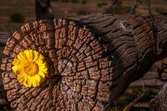 Cerca rústica Post With Wildflowers Imagens de Stock Royalty Free