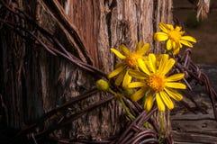 Cerca rústica Post With Wildflowers Fotografia de Stock Royalty Free