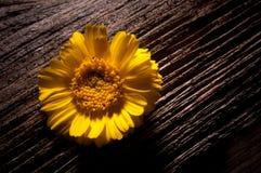 Cerca rústica Post With Wildflowers Imagens de Stock