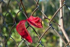 Cerca roja de la alambrada de la hoja Imágenes de archivo libres de regalías