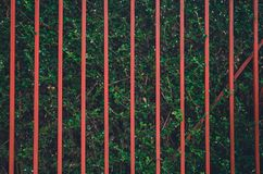 Cerca roja en la pared verde del ?rbol foto de archivo libre de regalías