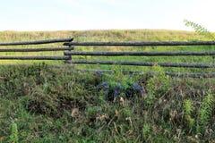Cerca rural de madera pintoresca y flores azules, campanas e hierba seca al lado de él bellflower imagen de archivo
