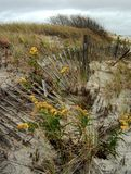 Cerca At The Shore da praia imagem de stock