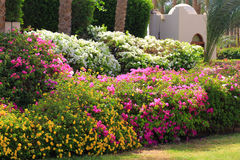 Cerca tropical da flor do jardim Imagens de Stock