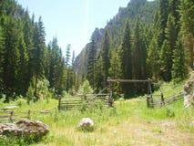 Cerca velha com porta na floresta densa imagens de stock royalty free