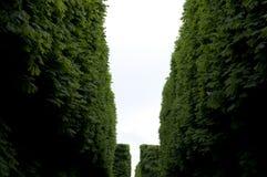 Cerca verde Fotos de Stock