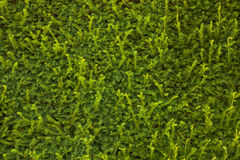 Cerca verde Foto de Stock Royalty Free