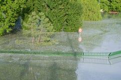 Cerca verde inundada Fotos de archivo libres de regalías