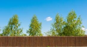 Cerca y abedul de madera viejos en un fondo bluesky, paisaje ruso Imagen de archivo libre de regalías