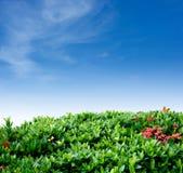 Cerca y cielo del arbusto Imagenes de archivo