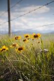 Cerca y flores 2 Imagen de archivo