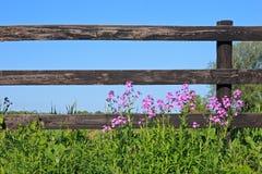 Cerca y flores salvajes Fotos de archivo libres de regalías