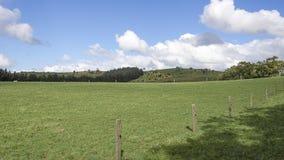 Cercado no prado contra um céu azul com nuvens lanosos Fotografia de Stock Royalty Free