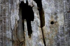 Cercado putrefacto de la madera fotos de archivo libres de regalías
