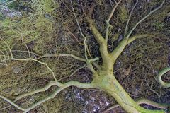 Cercando attraverso il centro di questo grande albero alto magnifico immagini stock