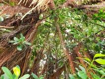 Cercando grande albero, spazio per testo in modello Fondo verde fotografia stock