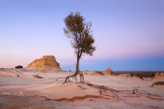 Cercando il paesaggio arido dell'acqua immagine stock libera da diritti