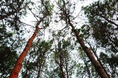 Cercare albero sotto il cielo fotografie stock