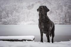 Cercare cane con un lago congelato nei precedenti fotografie stock libere da diritti