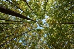 Cercare della foresta fotografie stock libere da diritti