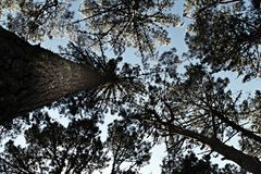 Cercare - foresta Fotografie Stock