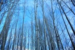 Cercare i rami di albero immagine stock