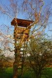 Cercare si nasconde in un albero Fotografia Stock Libera da Diritti