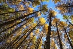 Cerchi degli alberi in sole d'angolo in Wulanbutong in Mongolia Interna fotografia stock