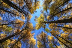 Cerchi degli alberi in sole medio in Wulanbutong in Mongolia Interna fotografie stock
