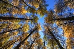 Cerchi degli alberi in sole in Wulanbutong in Mongolia Interna fotografia stock