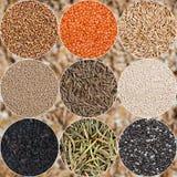 Cerchi del collage del cereale del grano Fotografia Stock