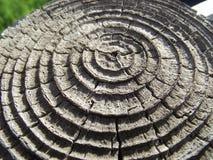 Cerchi dell'alberino della rete fissa Fotografie Stock Libere da Diritti