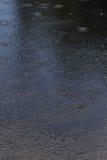 Cerchi di pioggia fotografia stock libera da diritti