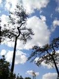 Cerchi l'albero ed il cielo Fotografia Stock Libera da Diritti