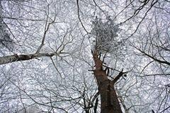 Cerchi negli alberi Fotografia Stock