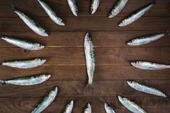 Cerchio dalle sardine Fotografia Stock