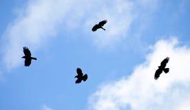 Cerchio dei corvi Immagini Stock