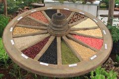 Cerchio dei semi nel giardino botanico di Chiangmai Fotografia Stock Libera da Diritti